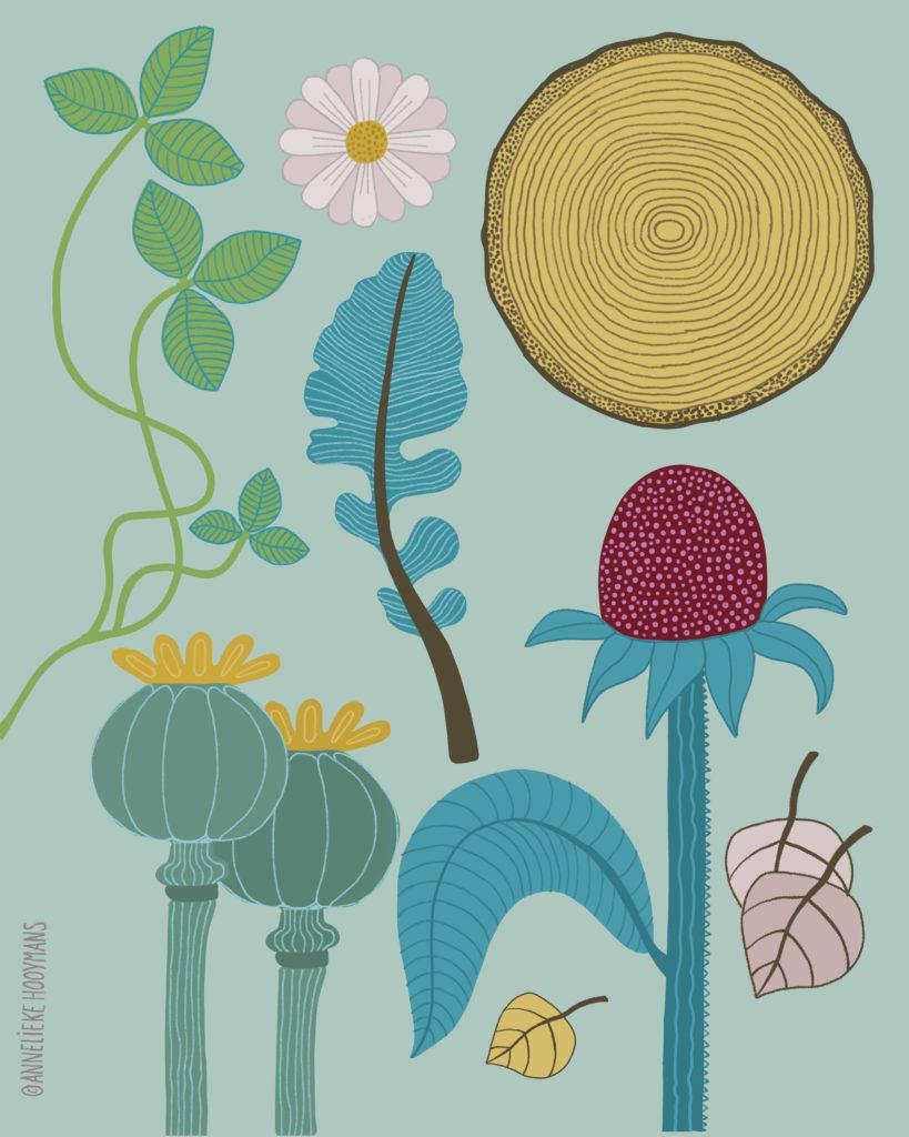 Planten, structuren en patronen, Illustratie Studio Annelieke