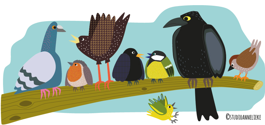 vogels-tellen